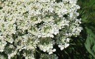 16HotSunWildflowers.jpg