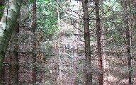 16townsendforest.jpg