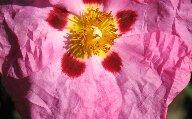 16wrinklyflower.jpg