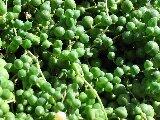 34succulent.jpg