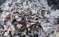 frostshrub.jpg