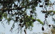 treedweebles.jpg